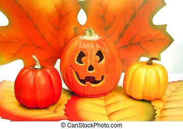 Pumpkins for autumn and halloween