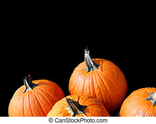 Pumpkins for jack o'lanterns isolated on black background. Plenty of space for your copy text.