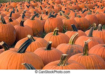 Pumpkins for sale 4