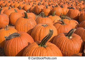 Pumpkins for sale 5