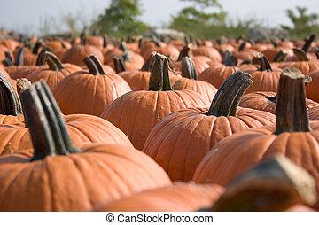 Pumpkins for sale 7
