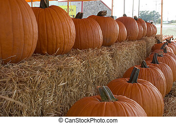 Pumpkins for sale3