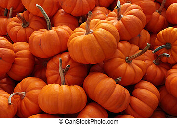 Pumpkins for thanksgiving or halloween decoration