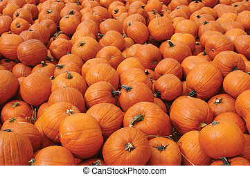 Pumpkins - Hundreds of orange pumpkins