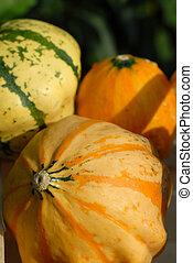 pumpkins impression