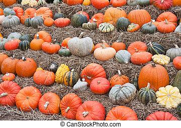 Pumpkins in a market of the Netherlands