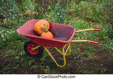 Pumpkins in a red wheelbarrow