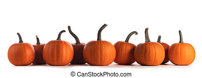 Pumpkins in a row on white background