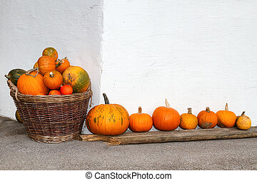 Pumpkins in a wicker basket and a row. Outdoors image in the autumn season.