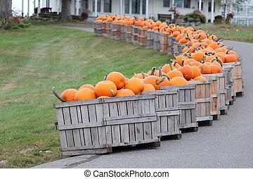 pumpkins in crates