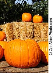 Pumpkins in rustic setting