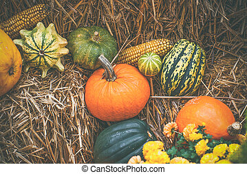 Pumpkins in various shapes