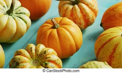 Pumpkins laid in row on table - From above view of ripe...