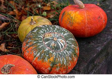 Pumpkins. Multicolored decorative pumpkins on autumn festival