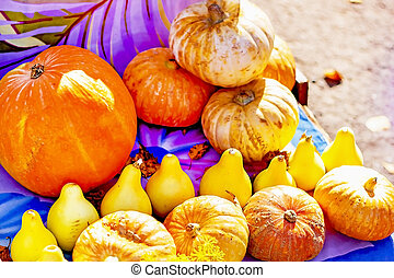 Pumpkins of different sizes, selling pumpkins on the market