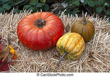 Pumpkins on a hay bale
