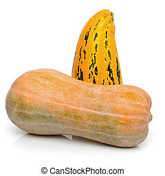 Pumpkins on a white background