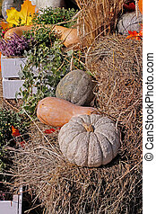 Pumpkins on straw as autumn decoration at market place