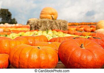 pumpkins on the marketplace