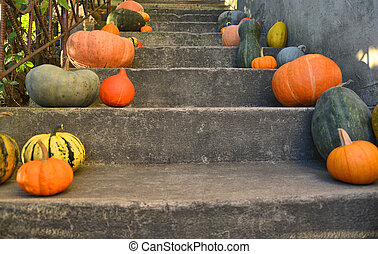 Pumpkins on the outdoor stairs