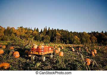 Pumpkins patch - A shot of a wheeled wagon carrying pumpkins...