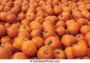 Pumpkins - Hundreds of orange pumpkins