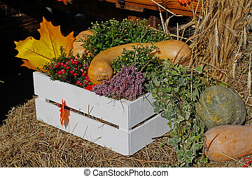 Pumpkins, pink berries of pernettya, heather in white box as autumn decoration at market place