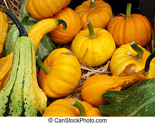 A background of pumpkins, sqaushes and gourds for sale at a market