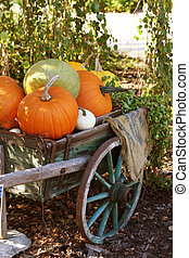 Pumpkins still-life with natural background