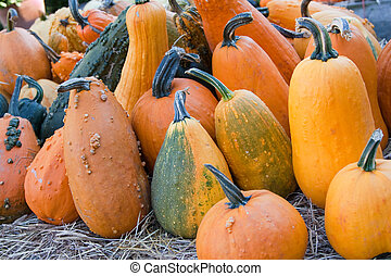 Pumpkins - A variety of pumpkins in different shapes and...