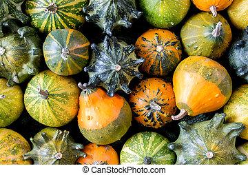 Pumpkins texture - autumn decorative background
