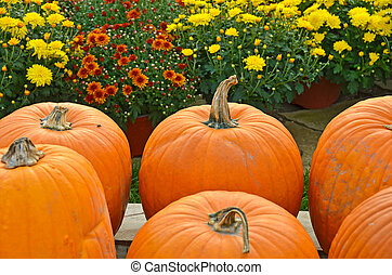 pumpkins with autumn mums