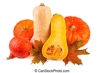 Pumpkins with fall leaves. Different squash on white background.