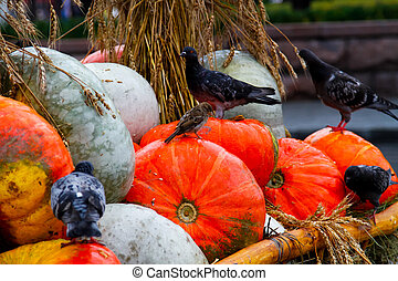 Pumpkins with pigeons and a sparrow