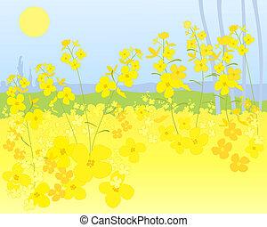 punjab mustard - an illustration of a beautiful bright...