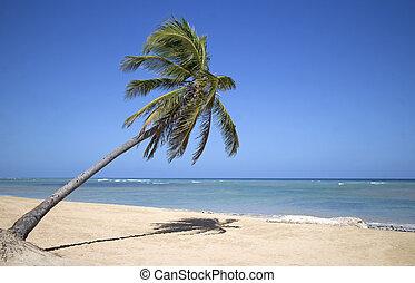 punta, 浜, cana