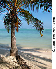 punta, cana, palmier