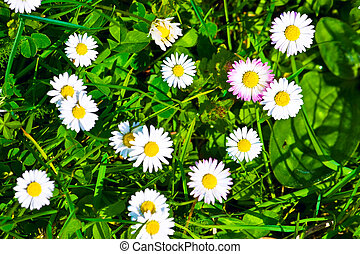 punta la vista, de, hierba verde, y, flores, plano de fondo