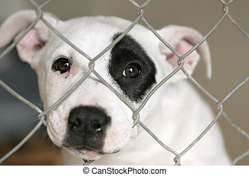 Pup in a pen looking out - Homeless animals series. Sad pup...