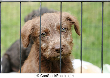 Pup in a pen - Homeless animals series. Cute pup looking out...
