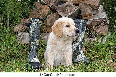 Pup 'N Boots