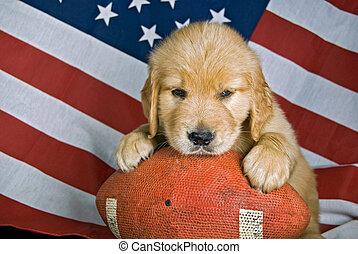 Pup on football - Golden retriever on a football.