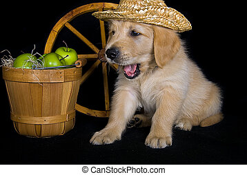 pup with apples