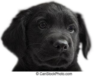 puppie on white background