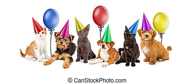 Puppies and Kittens in Party Hats With Balloons - A large...