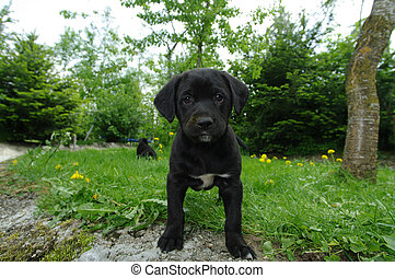 cute puppies in the meadow looking curios