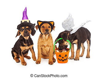 Puppies Dressed for Halloween - Three puppies wearing...