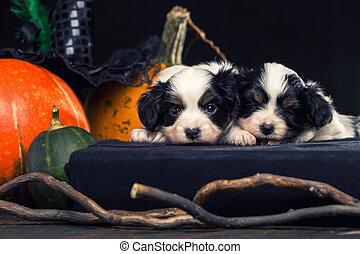 Puppies on the spellbook
