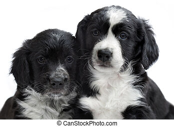 puppies on white background