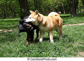 Puppies playing in public park